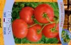 Сорт томата: Торжок f1
