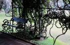 Выращивание лиан на садовой скамейке