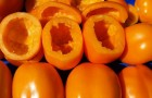 Сорт томата: Янтарный кубок