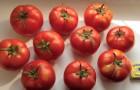 Сорт томата: Талисман