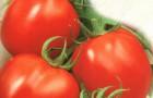 Сорт томата: Альтруист f1