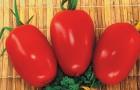 Сорт томата: Арбат f1