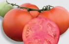 Сорт томата: Арнольд f1