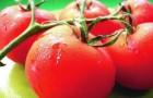 Сорт томата: Аспен f1
