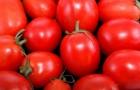 Сорт томата: Балтимор