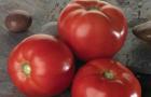 Сорт томата: Бэлла роса f1