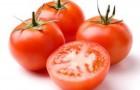Сорт томата: Берсола f1