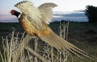 Болезнь фазанов – Гиповитаминоз В2