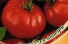 Сорт томата: Бони мм