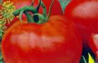 Сорт томата: Дашенька