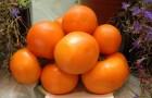 Сорт томата: Дина