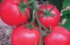 Сорт томата: Дочка f1