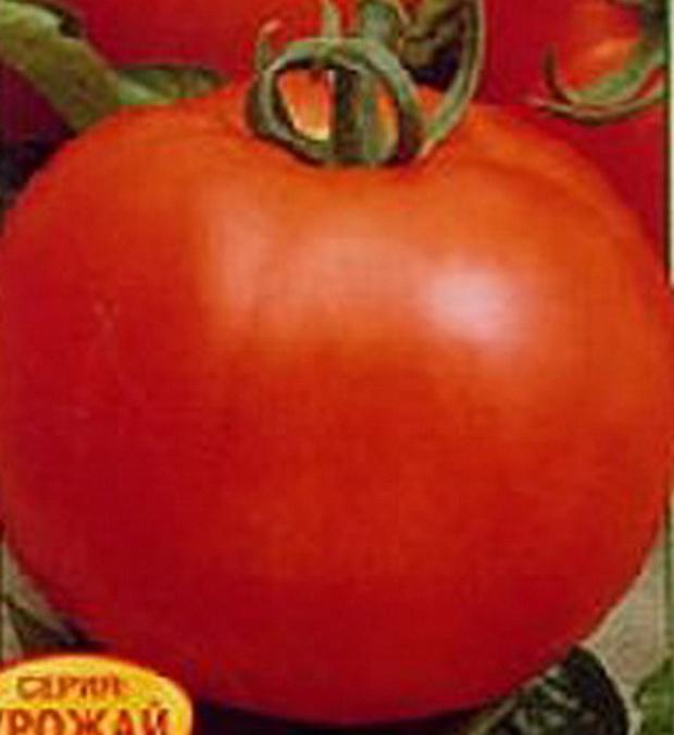 Сорт томата: Дуэт   f1