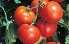 Сорт томата: Джамбо f1