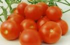 Сорт томата: Гном