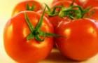 Сорт томата: Гречанка f1