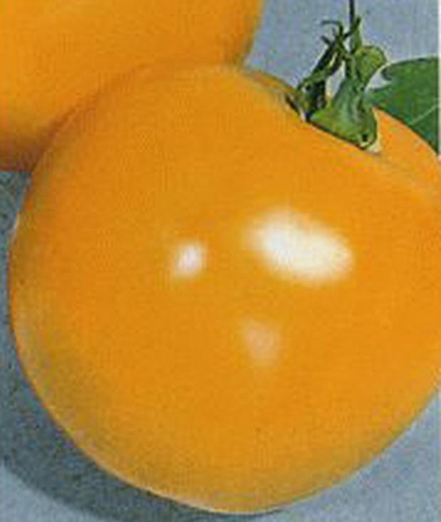 Сорт томата: Илья муромец