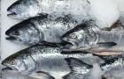 Как определить качество и свежесть рыбы