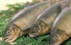 Какую рыбу покупать нельзя