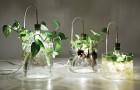 Комнатный сад на воде