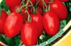 Сорт томата: Комнатный сюрприз