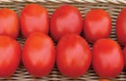 Сорт томата: Конкистадор f1