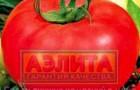 Сорт томата: Ласковый миша f1