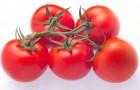 Сорт томата: Леванзо f1