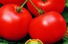 Сорт томата: Макс