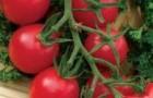 Сорт томата: Мальвина