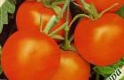 Сорт томата: Мандаринка