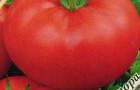 Сорт томата: Мастер f1