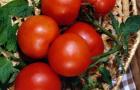 Сорт томата: Невская лакомка