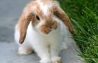 Незаразные болезни кроликов – Витамин А