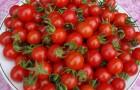 Сорт томата: Оксана