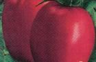Сорт томата: Оникс f1