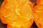 Сорт томата: Оранжевый слон