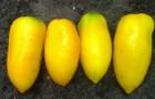 Сорт томата: Перцевидный желтый