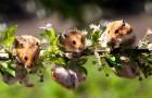 Почему на одном растении твердые и мягкие семена