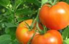 Сорт томата: Вальс f1