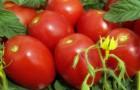 Сорт томата: Валя f1