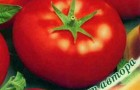 Сорт томата: Владимир f1