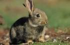 Заболевания кроликов – Дизентерия, энтериты