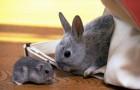 Заболевания кроликов – Стафилококкоз