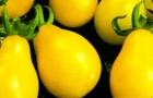 Сорт томата: Золотые колокола f1