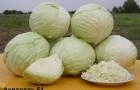 Сорт капусты белокочанной: Акварель f1