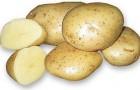 Сорт картофеля: Белоснежка
