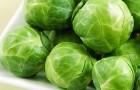 Сорт капусты белокочанной: Бородин f1