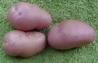 Сорт картофеля: Дезире