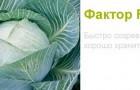 Сорт капусты белокочанной: Фактор f1